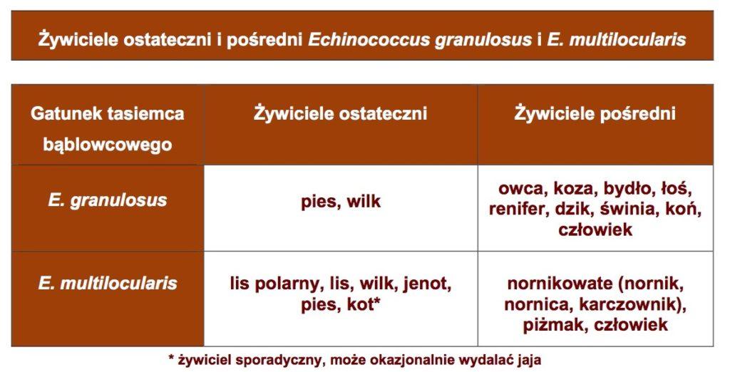 Żywiciele ostateczni ipośredni Echinococcus granulosus iE. multilocularis